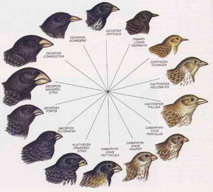 Algunas breves nociones sobre la teoría de Darwin-Wallace