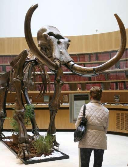 Un equipo de investigadores japoneses quiere 'resucitar' al mamut en cinco años