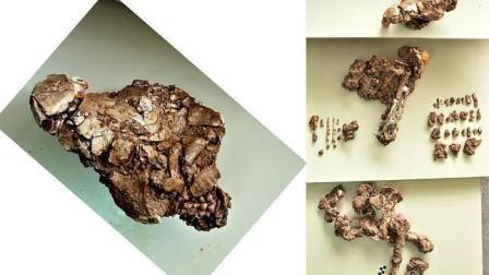 Hallan en Murcia el esqueleto más completo de un joven neandertal
